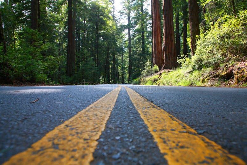 Estrada vazia na floresta gigante do Redwood fotos de stock royalty free