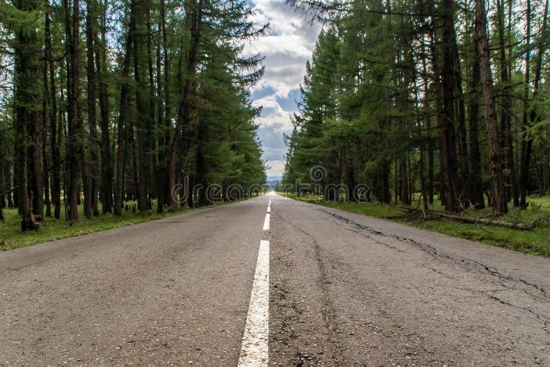 Estrada velha na floresta foto de stock royalty free