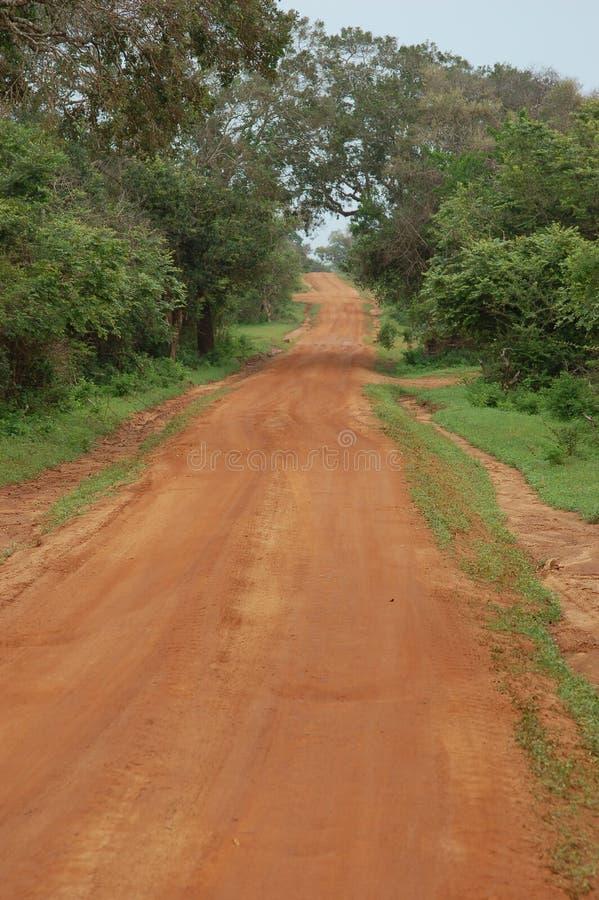 Estrada vermelha da sujeira no savana foto de stock