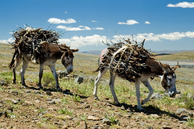 Estradas Letseng de Lesotho fotografia de stock royalty free