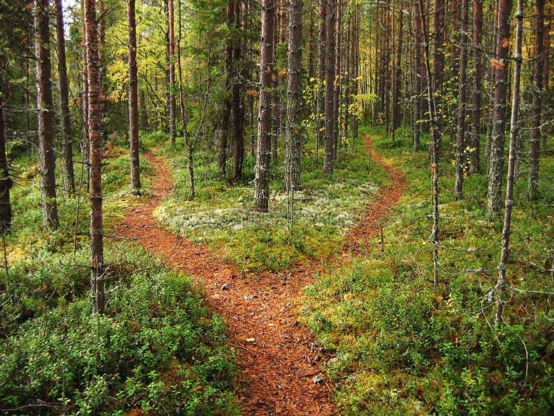 Estradas transversaas na floresta imagens de stock