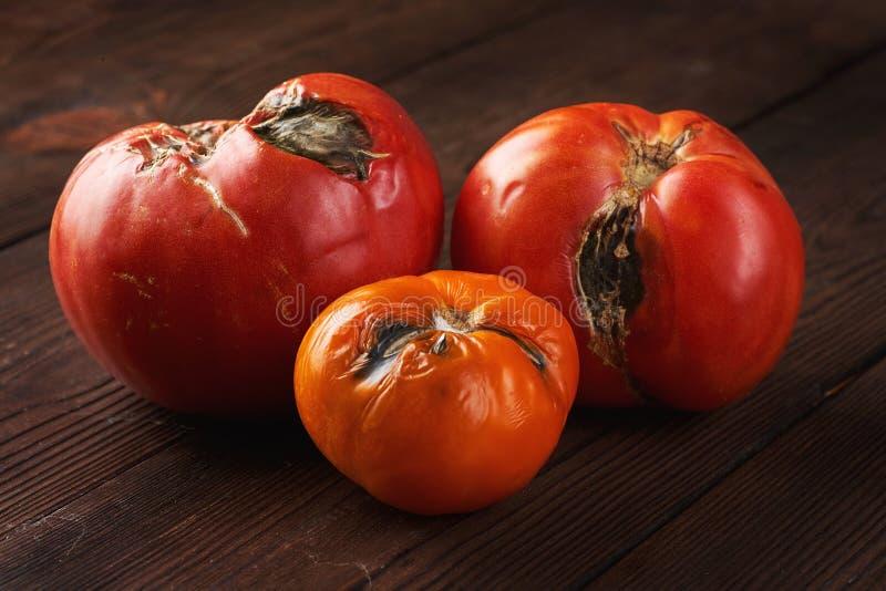 Estragado três tomates em um fundo de madeira escuro imagem de stock