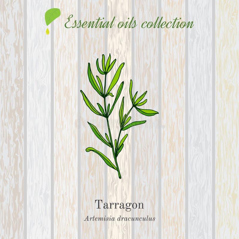 Estragon, istotnego oleju etykietka, aromatyczna roślina royalty ilustracja
