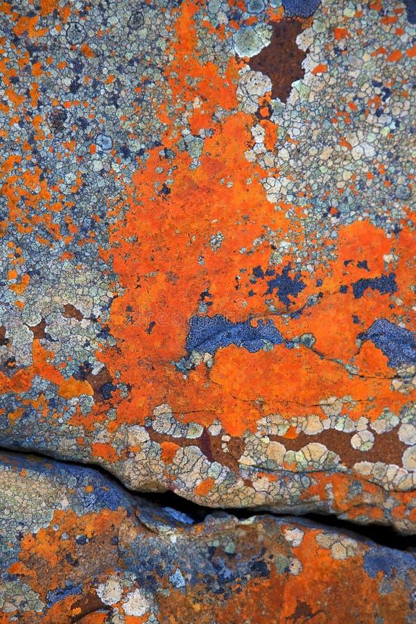 Estratti del lichene fotografie stock