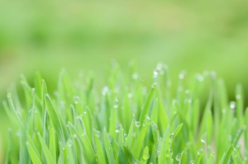 Estratto Bokeh della foglia verde su fondo verde vago immagine stock