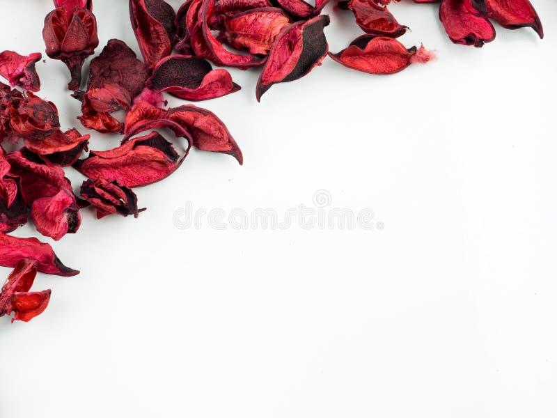 Estratto con i petali rossi secchi su fondo bianco fotografia stock