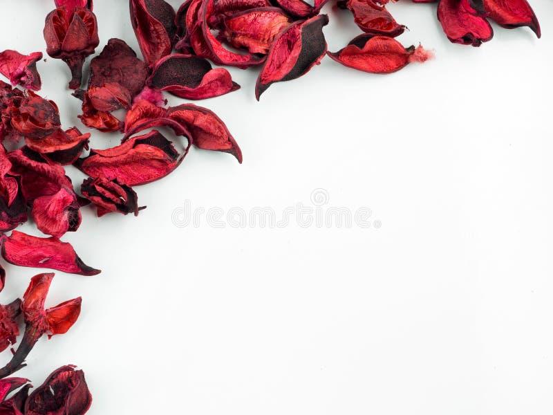 Estratto con i petali rossi secchi su fondo bianco immagine stock