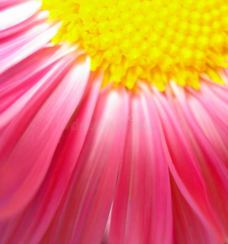 Estratto dei petali del fiore immagini stock libere da diritti
