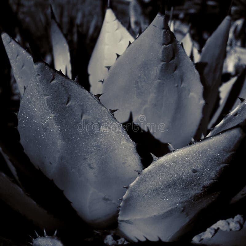 Estratto del succulente immagini stock libere da diritti