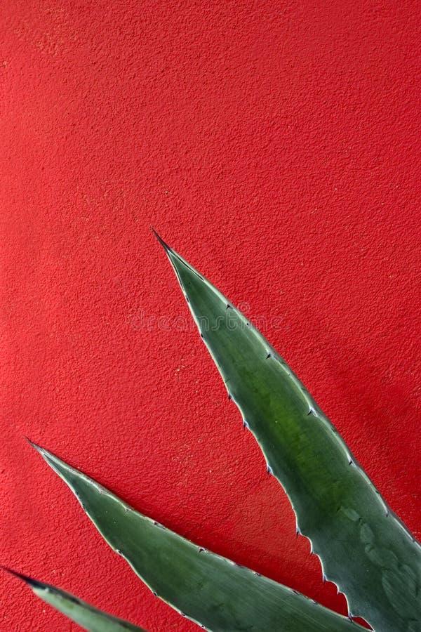 Estratto dell'agave immagini stock