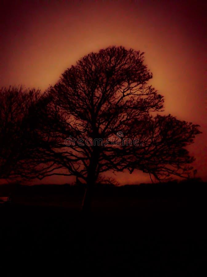 Estratto dell'albero immagine stock libera da diritti