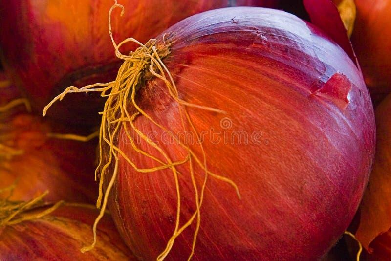 Estratto della cipolla rossa fotografie stock libere da diritti