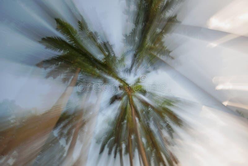Estratto delle palme reali nel parco di Greynolds, Miami Beach del nord, Florida fotografia stock