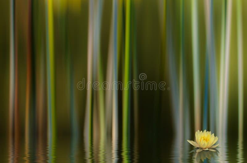 Estratto di Lilly dell'acqua immagini stock libere da diritti