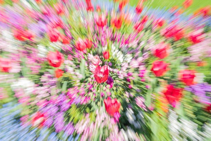 Estratto impressionista floreale luminoso nella sfuocatura dello zoom immagine stock libera da diritti