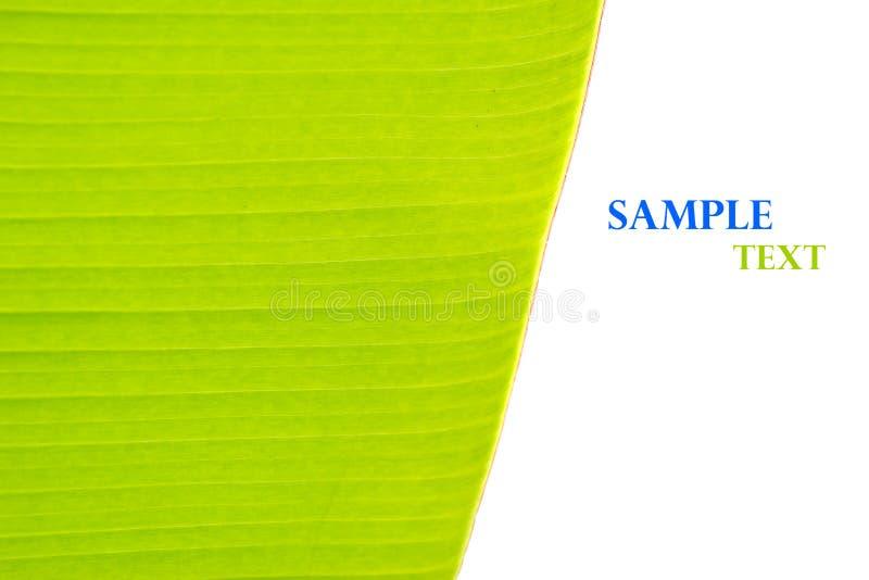 Estratto verde del fondo della foglia della banana fotografie stock libere da diritti