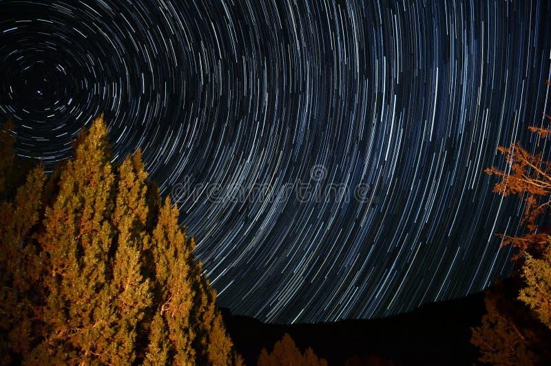 A estrela arrasta em torno da estrela do polo com uma árvore iluminada por uma fogueira fotos de stock