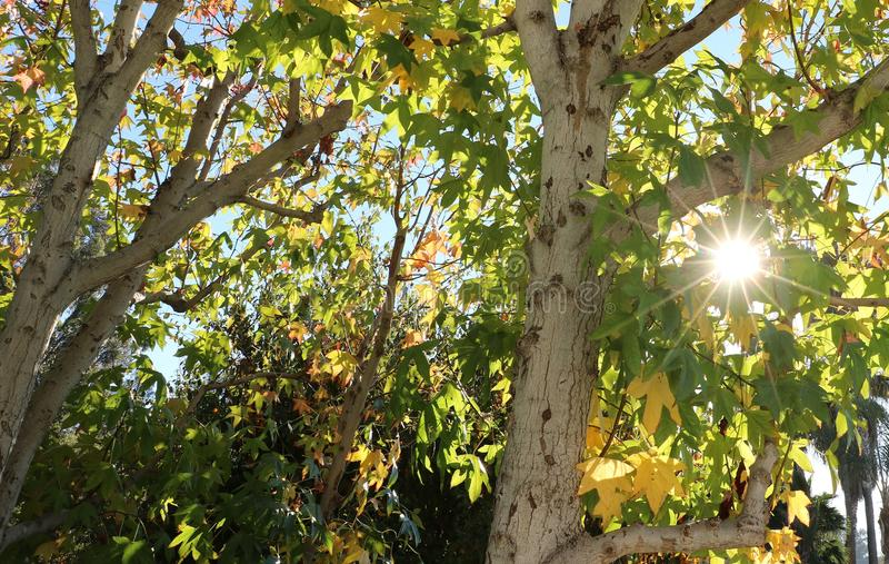 Estrela da árvore foto de stock royalty free