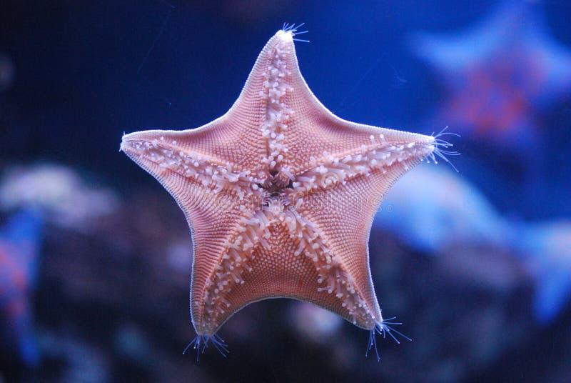 Estrela de mar fotos de stock