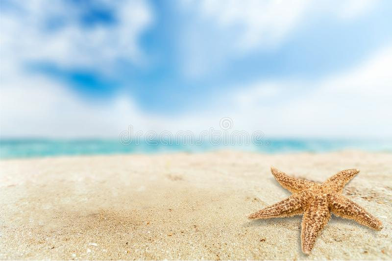 Estrela de mar do close-up no Sandy Beach no dia ensolarado fotos de stock