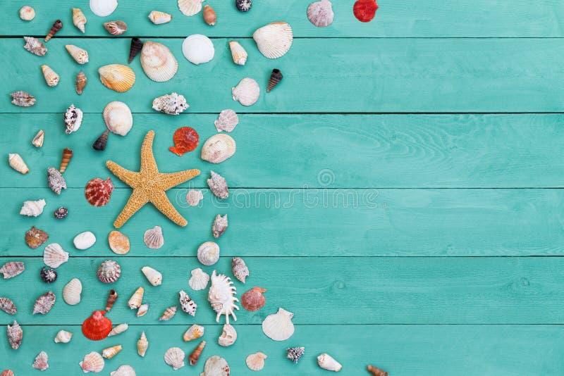 Estrela de mar e shell sortidos do mar na madeira manchada foto de stock