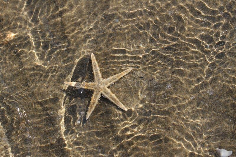 Estrela de mar espetacular sob a água do mar tropical morna imagens de stock royalty free