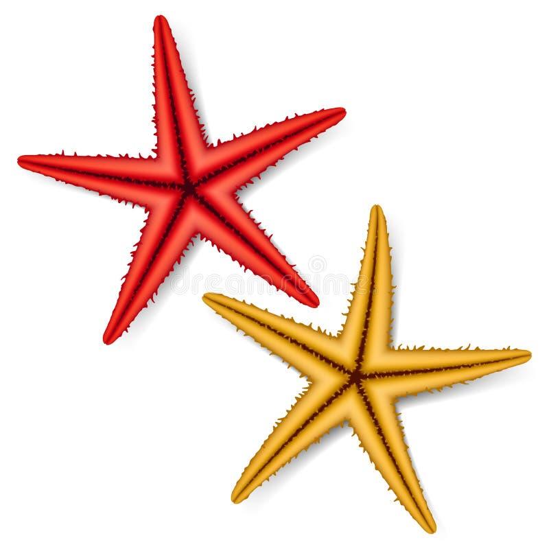 Estrela do mar ilustração do vetor