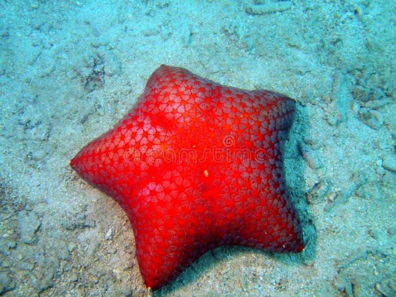 Estrela do mar fotografia de stock royalty free