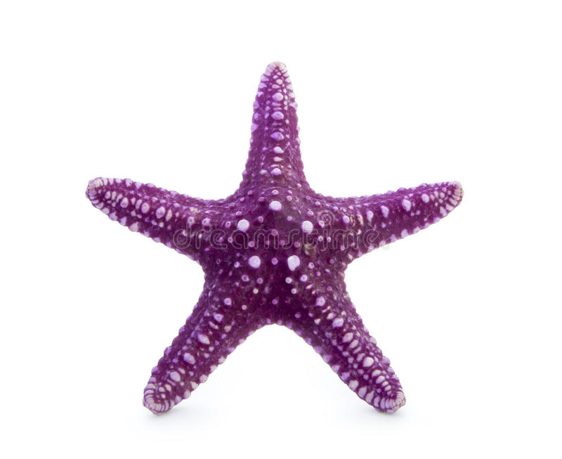 Estrela do mar fotografia de stock