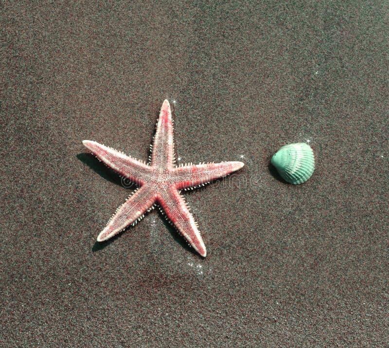 Estrela do mar com um shell na costa do mar foto de stock royalty free