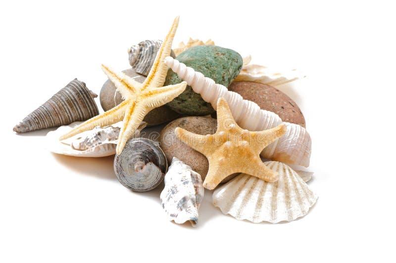 Estrela do mar, conchas do mar e pedras imagem de stock royalty free
