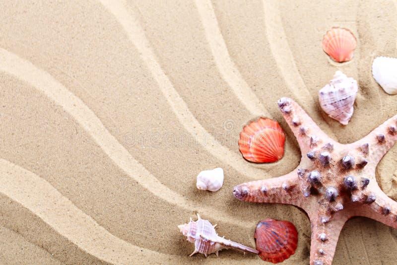 Estrela do mar, conchas do mar, pedras do mar e folhas de palmeira encontrando-se na areia do mar Há um lugar para etiquetas fotos de stock royalty free