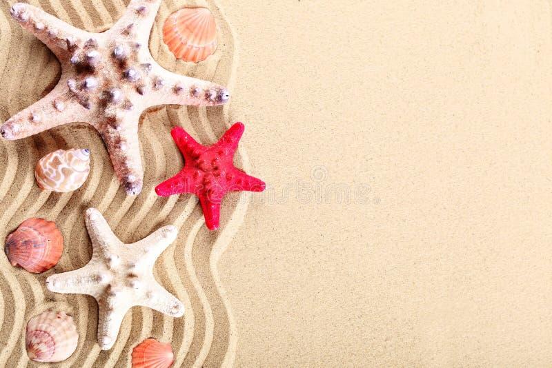 Estrela do mar, conchas do mar, pedras do mar e folhas de palmeira encontrando-se na areia do mar Há um lugar para etiquetas imagem de stock