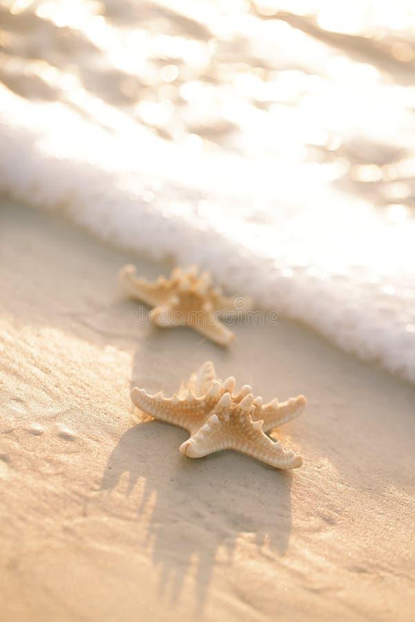 Estrela do mar dois na praia do oceano do mar em Florida, nascer do sol delicado macio imagem de stock