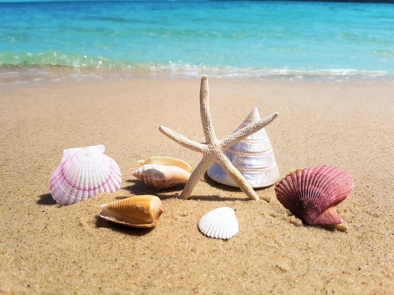 Estrela do mar dos shell na praia fotos de stock royalty free