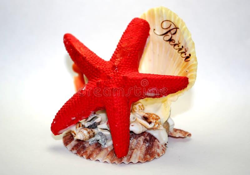 Estrela do mar e escudo fotos de stock royalty free