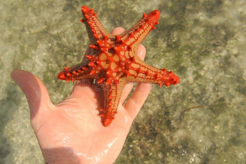 Estrela do mar em uma praia fotografia de stock royalty free