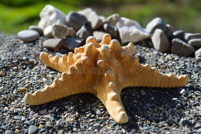 Estrela do mar na areia no litoral foto de stock royalty free