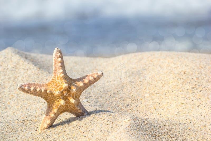 Estrela do mar na areia na perspectiva da ressaca nos raios do sol do verão imagens de stock