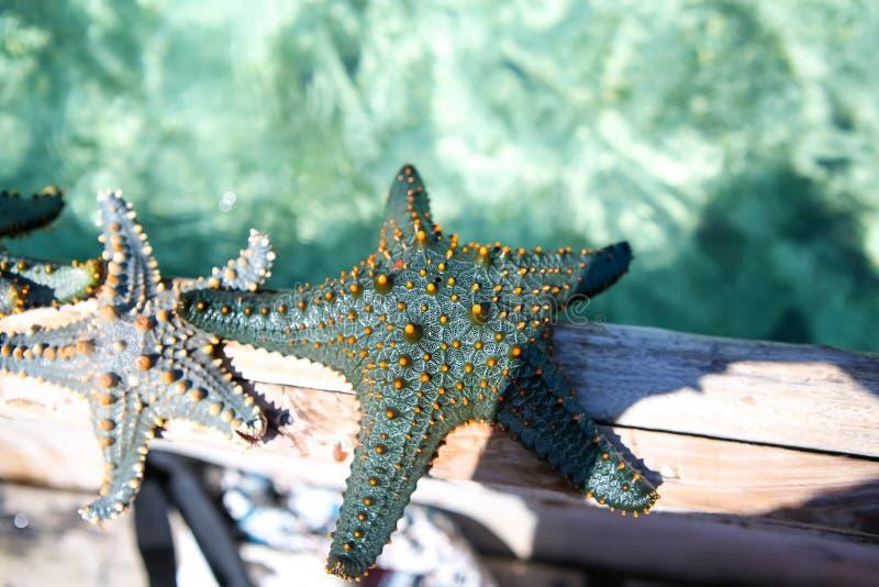 Estrela do mar na lagoa na praia do sul no oceano marin fotografia de stock