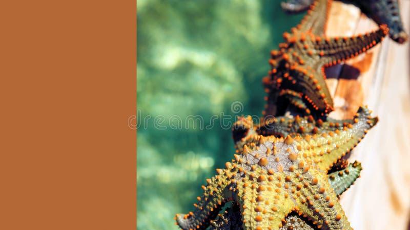 Estrela do mar na lagoa na praia do sul no oceano marin imagens de stock