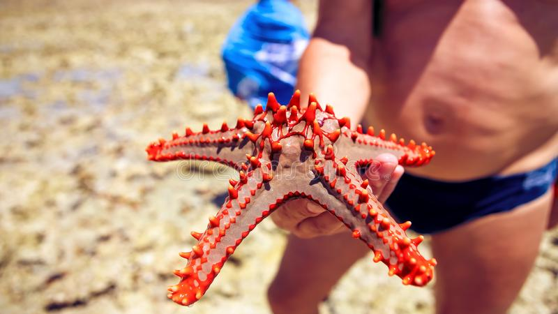 Estrela do mar na lagoa na praia do sul no oceano marin imagem de stock