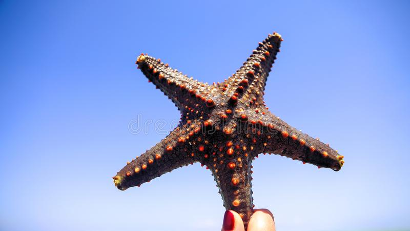Estrela do mar na lagoa na praia do sul no oceano marin imagem de stock royalty free