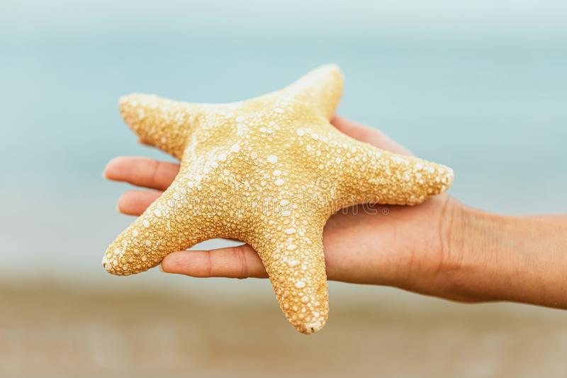 Estrela do mar na palma no fundo do mar imagens de stock royalty free