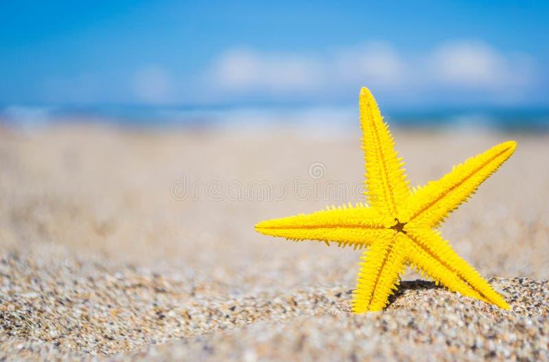 Estrela do mar na praia foto de stock