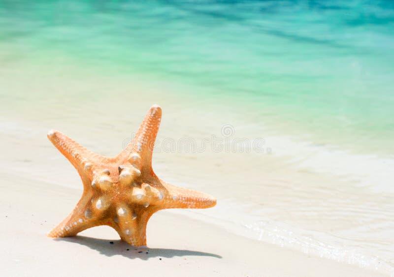 Estrela do mar na praia imagem de stock