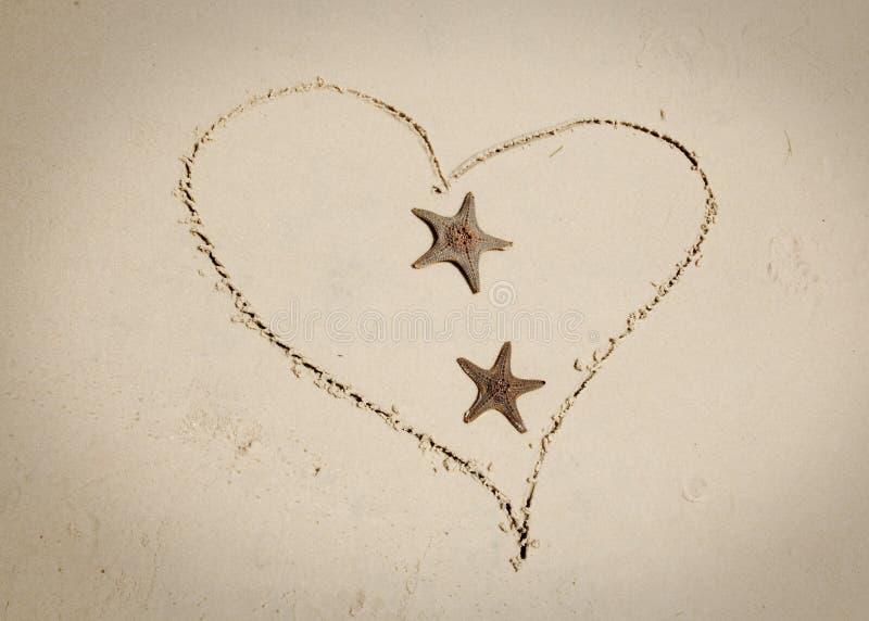 Estrela do mar no amor ilustração do vetor