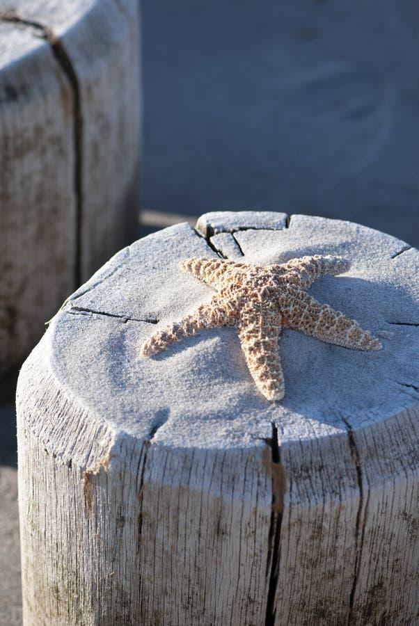 Estrela do mar no cargo de madeira na praia fotos de stock royalty free