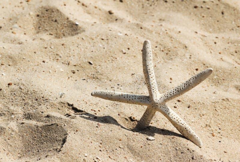 Estrela do mar no Sandy Beach fotos de stock