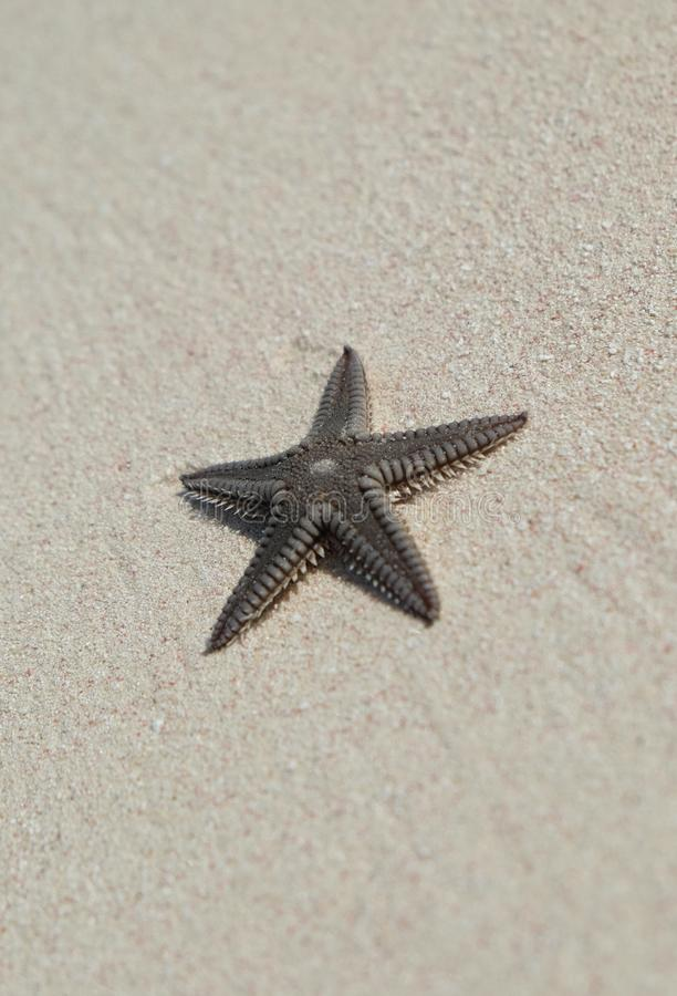 Estrela do mar no Sandy Beach foto de stock